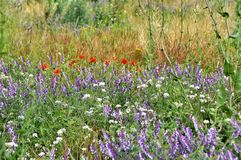 Wildflowers on the meadow Stock Photo