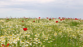 Wildflowers meadow spring season Royalty Free Stock Photo