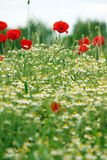 Wildflowers meadow spring season Stock Images