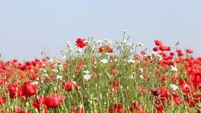 Wildflowers meadow summer season stock video footage