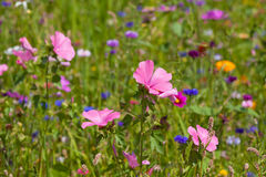 Wildflowers on a meadow in a sunny day Stock Photos