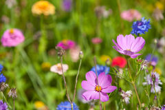 Wildflowers on a meadow in a sunny day Stock Photography
