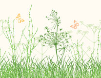 Wildflowers on the meadow Stock Photography