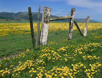 Wildflowers, meadows, old fence, mountains and sky Stock Images