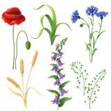 Wildflowers messi royalty illustrazione gratis