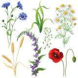 Wildflowers messi illustrazione vettoriale
