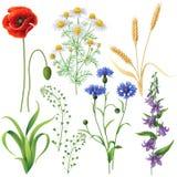Wildflowers messi Fotografie Stock Libere da Diritti