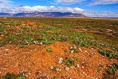 Wildflowers met verre bergen royalty-vrije stock fotografie