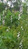 Wildflowers minuscules ! Photographie stock libre de droits
