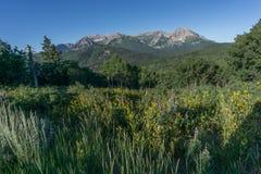 Wildflowers mit Rocky Mountains im Hintergrund lizenzfreie stockfotografie