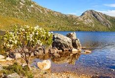 Wildflowers - montagne de berceau image libre de droits