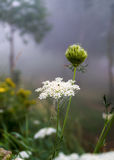 Wildflowers in the morning fog Stock Photography