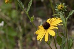Wildflowers mornos do verão Imagem de Stock Royalty Free