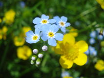 Wildflowers in mountain area Stock Images