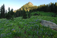 Wildflowers in Mountain Meadow Stock Photo
