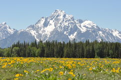Wildflowers and mountain peaks Royalty Free Stock Image
