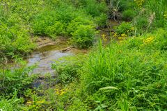 Stream through a Mountain Meadow. Wildflowers by a mountain stream located in a meadow of the Blue Ridge Mountains of Virginia, USA stock images