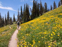 Wildflowers on mountain trail Royalty Free Stock Photography