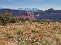 Wildflowers and mountains in desert. Desert landscape with wild flowers in bloom, red rock cliffs and mountains in the distance in southern Utah Stock Photography