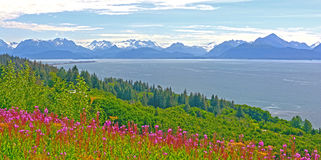 Wildflowers and Mountains by and Ocean Bay Stock Images