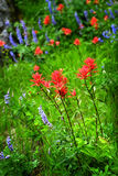 Wildflowers in Mountains Wilderness. Color Royalty Free Stock Photos