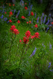 Wildflowers in Mountains Wilderness. Color Royalty Free Stock Photo