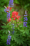 Wildflowers in Mountains Wilderness. Color Stock Photography