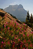 Wildflowers Mountainscape Stockfotos