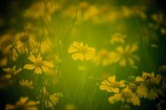 Wildflowers mous de jaune de foyer Images libres de droits
