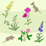 Wildflowers and mouse texture Stock Images