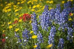 Wildflowers on Mt. Baker Stock Photos