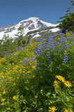 Wildflowers on Mt. Baker Stock Photography