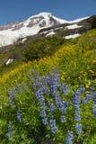 Wildflowers on Mt. Baker Stock Photo