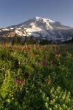 Wildflowers Mt. Rainier National Park Skyline Trail del verano tardío imagen de archivo libre de regalías