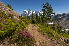 Wildflowers and Mt. Shuksan Royalty Free Stock Photo