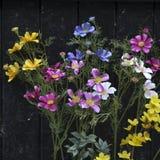 Wildflowers multicolores en el fondo de la puerta negra Fotografía de archivo libre de regalías