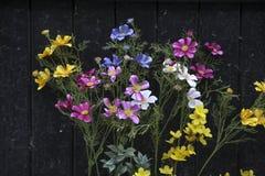 Wildflowers multicolores en el fondo de la puerta negra Imagen de archivo libre de regalías