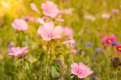 Wildflowers na łące w słonecznym dniu Obrazy Royalty Free
