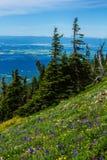 Wildflowers Na Alpejskiej grani fotografia stock