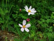 Wildflowers na bocznej drodze obrazy royalty free