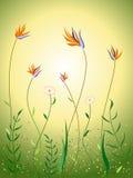 Wildflowers na cena da mola Ilustração do Vetor