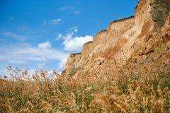 Wildflowers na costa alta pelo mar, paisagem litoral bonita, conceito do curso fotos de stock royalty free