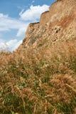 Wildflowers na costa alta pelo mar, paisagem litoral bonita, conceito do curso fotos de stock