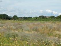 Wildflowers Na The Field Obraz Royalty Free