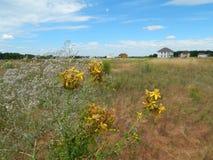 Wildflowers Na The Field Obrazy Royalty Free