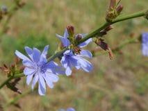 Wildflowers Na The Field Zdjęcia Royalty Free