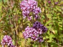 Wildflowers Na The Field Obraz Stock