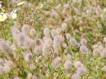 Wildflowers Na The Field Zdjęcie Royalty Free