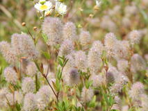 Wildflowers Na The Field Obrazy Stock