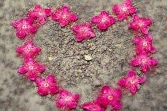 Wildflowers na flor da natureza na manhã fotografia de stock